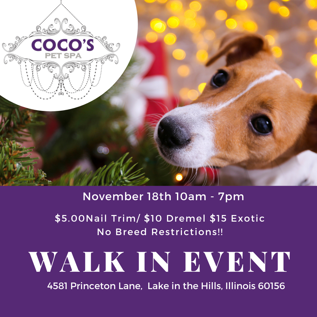Walk In event at Cocos Pet Spa