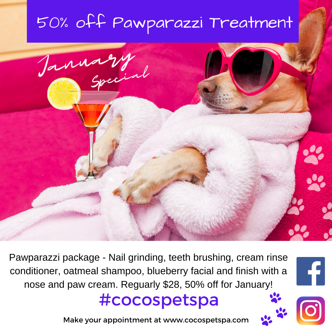 January Special at Coco's Pet Spa